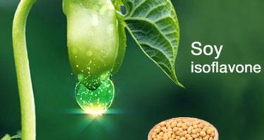 Những điều nên biết về chất isoflavone trong đậu nành