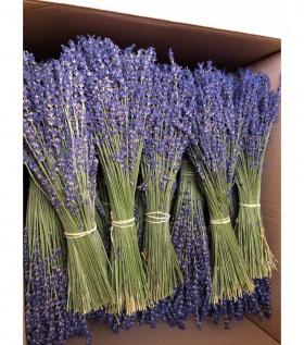 Bó Lavender nguyên bản