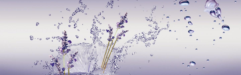 Shop hoa Lavender Đà Nẵng